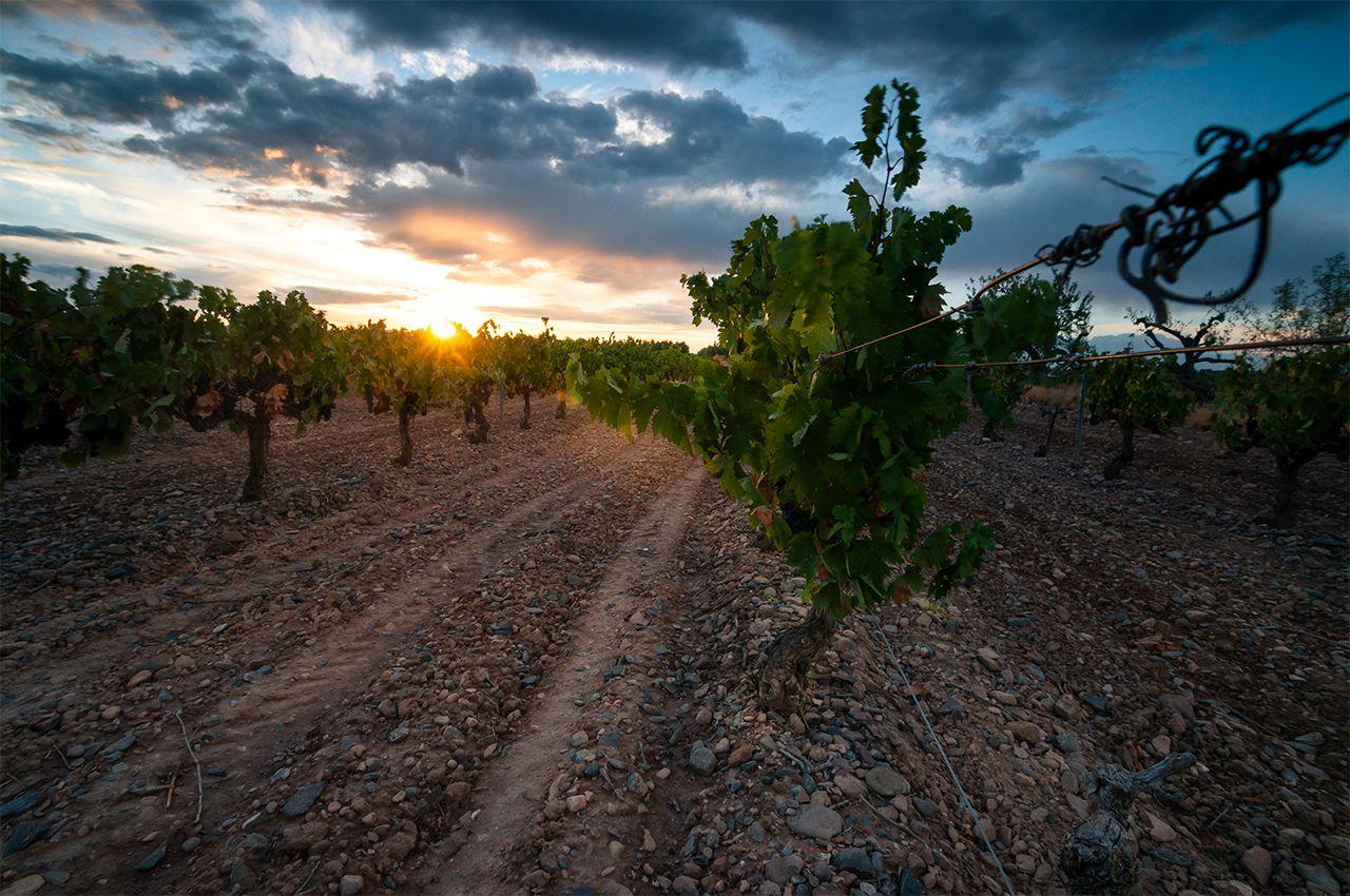 Ganadora Categoría Viñas  Fotovino 2017 Malón de Echaide